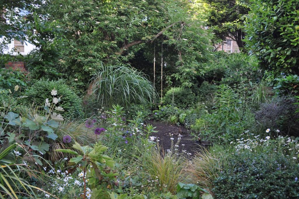 Miscanthus sinensis, allium hollandicum, allium aflatuense, leucanthemum vulgare, anemanthele lessoniana, buxus sepervirens, macleaya cordata gardening, north london,