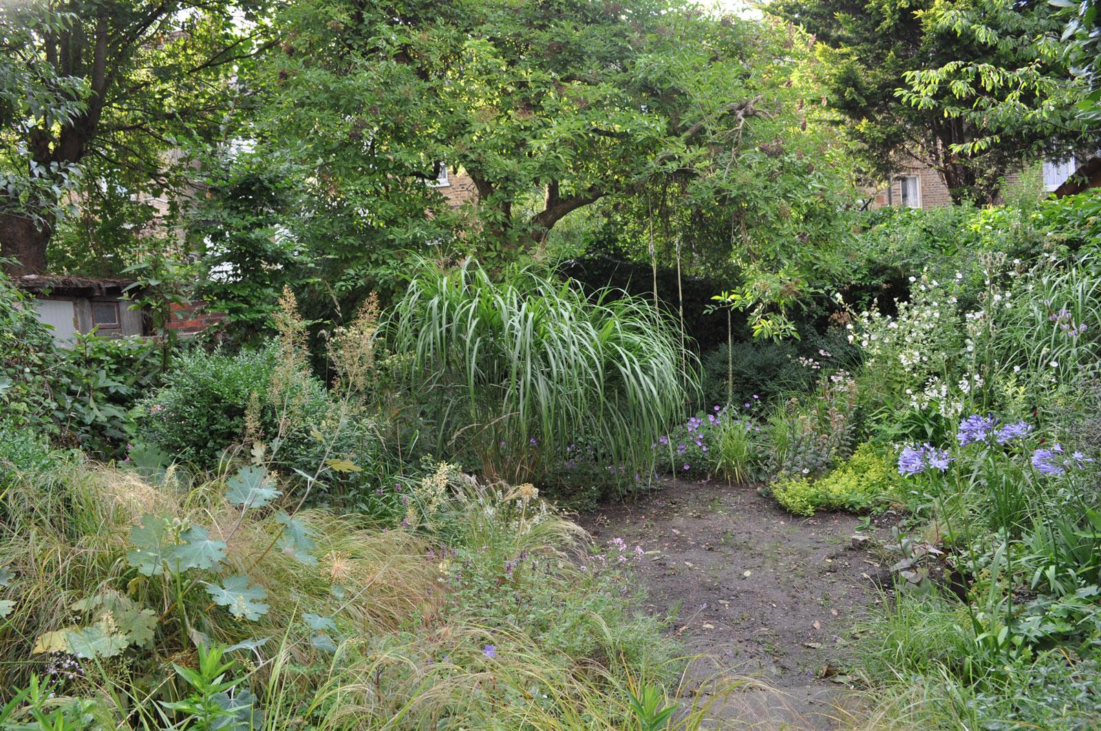 soft planting, romantic planting, meadow planting. perennial planting, naturalistic planting, planting design, urban garden design, city garden