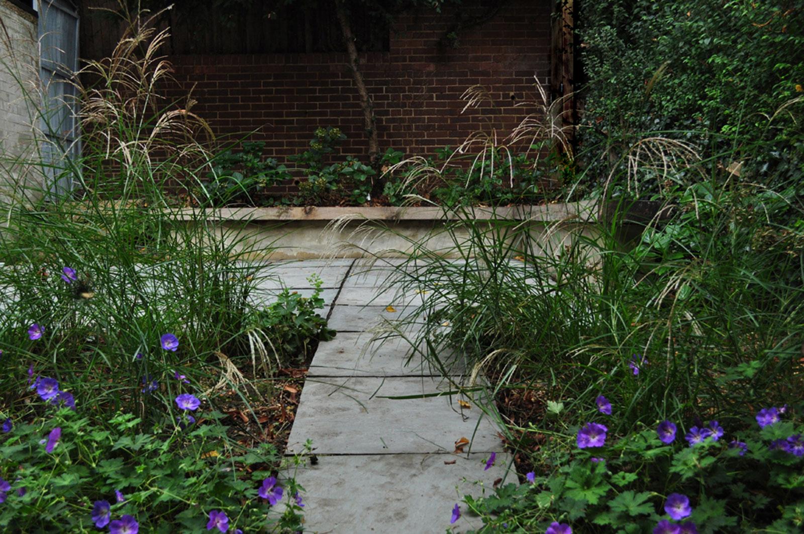 hydrangea macrophylla, Miscanthus sinensis, alchemilla mollis, geranium rozanne, sandstone paving, retaining wall, small garden, urban garden, contemporary garden design, modern garden design