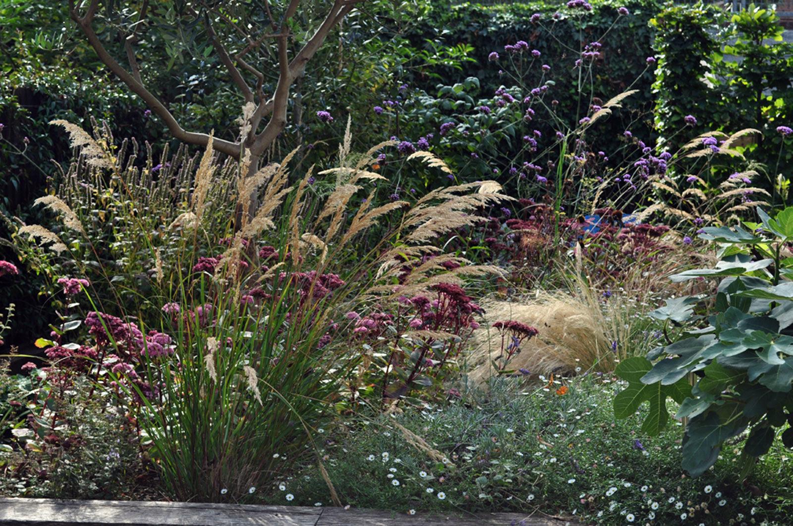 sedum-stipa-verbena-flowering-Late-summer