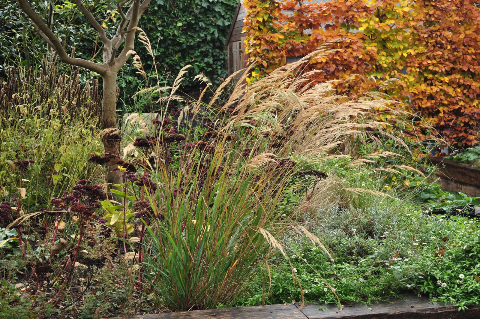 sedum-telephium-and-stipa-calamagrostis-in-autumn