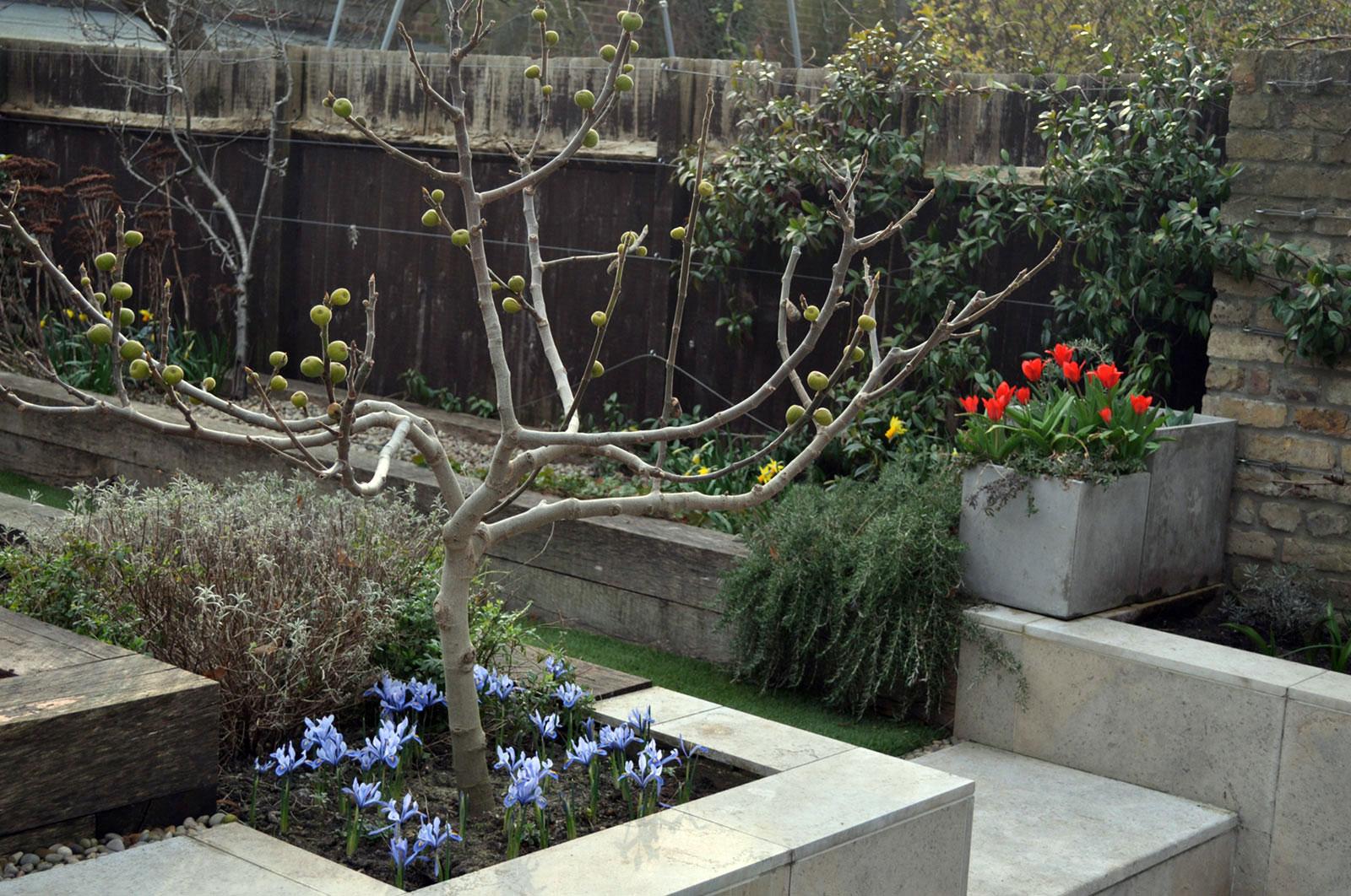 tulip-iris-narcissus-in-late-winter
